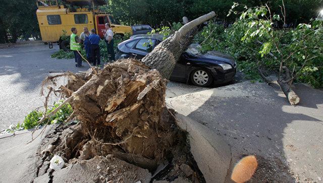 Упавшие в результате сильного ветра деревья. Архивное фото