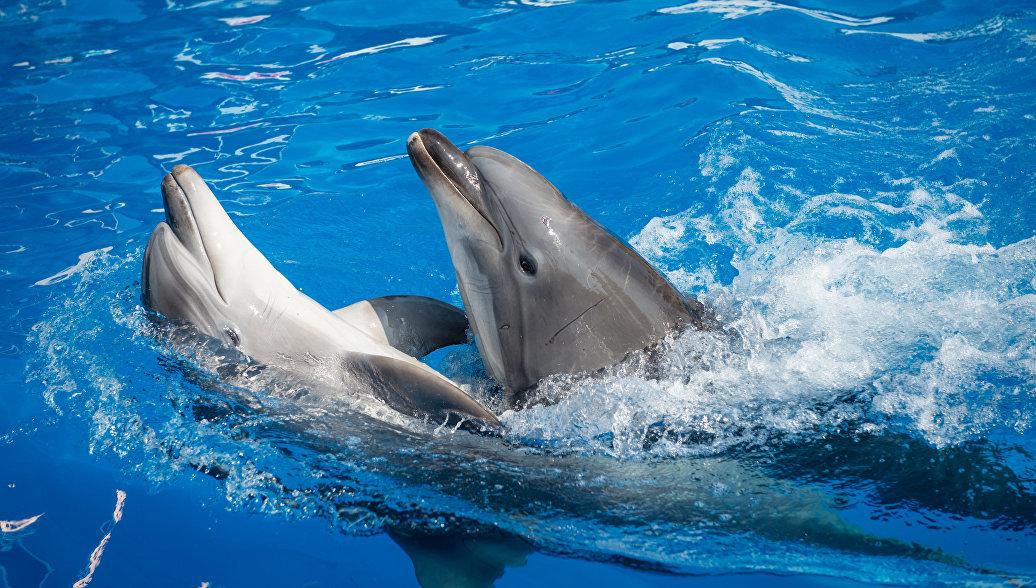 Дельфины в бассейне дельфинария в Севастополе