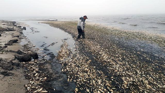 Гибель сельди на побережье залива Пильтун на северо-востоке Сахалина. 13 июгня 2018