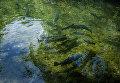 Рыбная ферма на территории Крымского природного заповедника