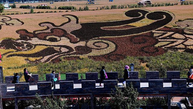 Изображение дракона на рисовом поле