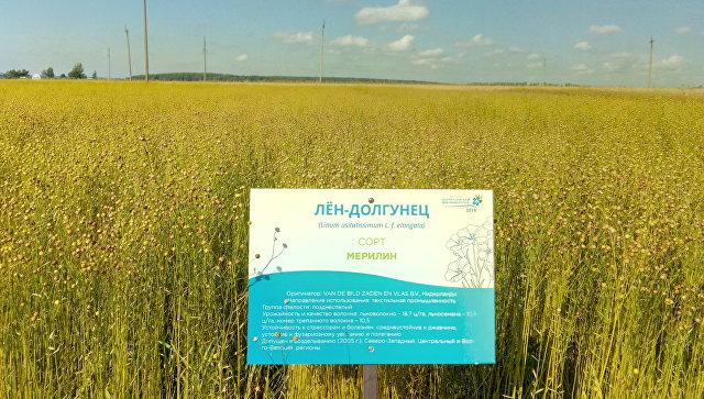Возрождение льняного комплекса России требует дополнительных мер поддержки