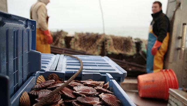 Гребешки на борту рыбацкой лодки, Франция. Архивное фото