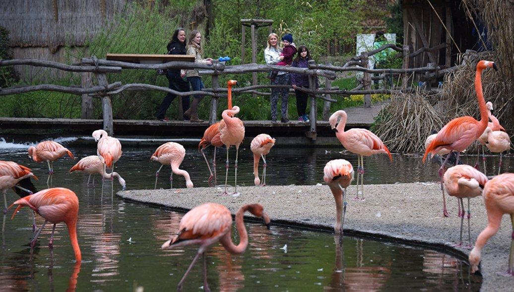 Посетители наблюдают за красными и чилийскими фламинго в пражском зоопарке (Zoo Praha). Архивное фото.