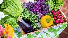 Салат и овощи. Архивное фото