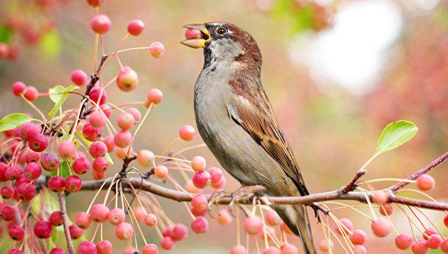 Птица. Архивное фото