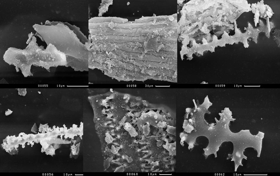 Фитолиты из навоза. По их форме определяют растения, которыми питались домашние животные
