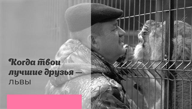 Дружить со львами: как заботятся о диких животных в Центре передержки