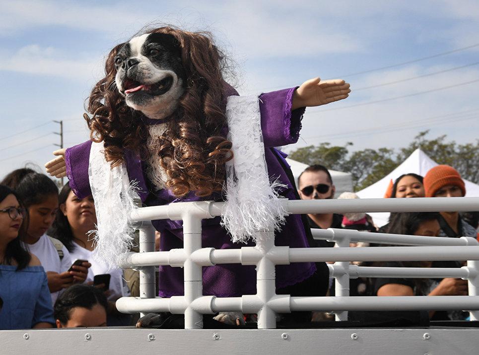 Собака в костюме на ежегодном параде в канун Хеллоуина в Лонг-Бич, Калифорния. 28 октября 2018 года