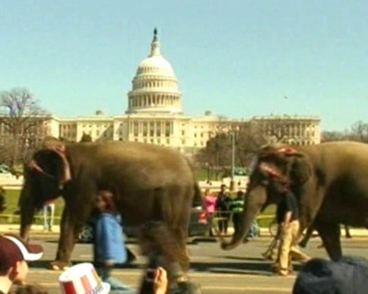 Колонна слонов промаршировала у здания Конгресса США