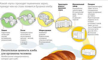 Технология изготовления хлеба: от зерна до буханки