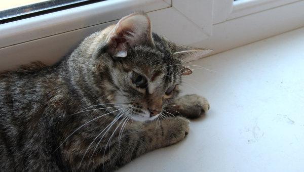 Пятиухая кошка из Воронежа