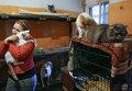 Работа приюта для собак в Новосибирске