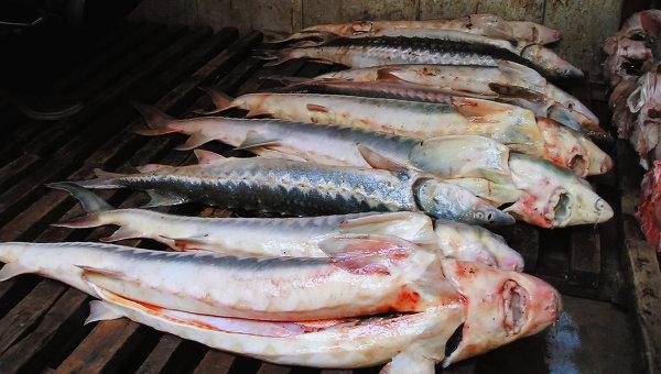Тухлая рыба указала на ошибки палеонтологов