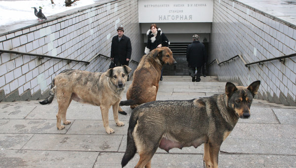 Бродячие собаки у входа в метро. Архивное фото