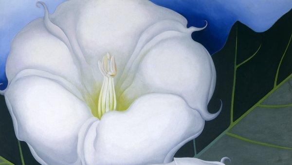 Джорджия О'Кифф (Georgia O'Keeffe). Два цветка дурмана с зелеными листьями и синим небом. 1938 год. Работа представлена на выставке в Выставочном зале Hypo-Kulturstiftung (Мюнхен)