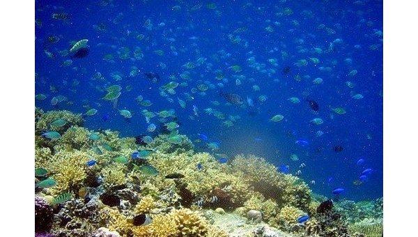 Рифы. Архив