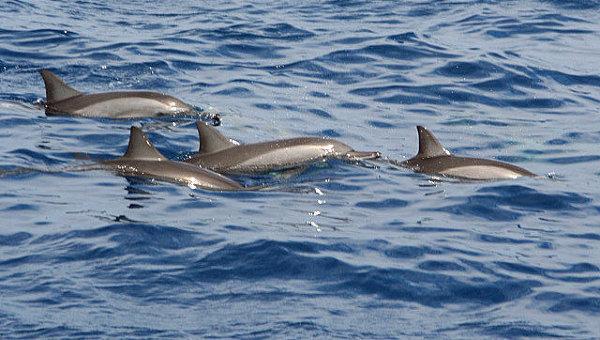 Дельфины. Архив