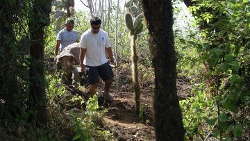 Черепаха по кличке Одинокий Джордж обнаружена мертвой в заповеднике на острове Санта-Крус
