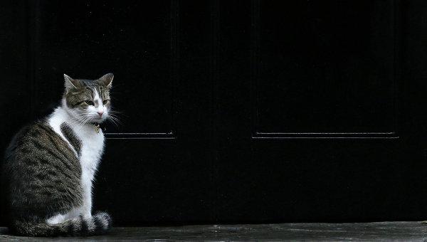 Кот на улице Лондона