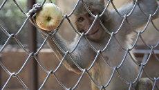 Сухумский обезьяний питомник Абхазия обезьяны
