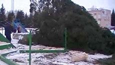 В Самарской области упала новогодняя ель