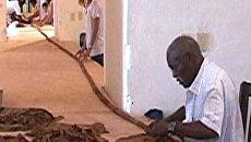 Кубинец скрутил самую длинную в мире сигару длиной более 81 метра