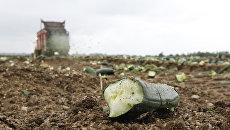 Французские фермены уничтожают урожай огурцов, пригодных для продажи
