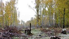 Химкинский лес. Архив