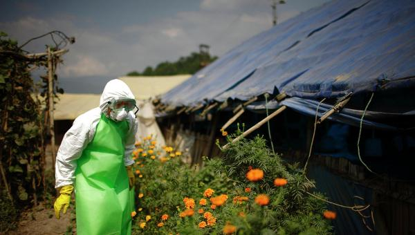 Дезинфекция птицефабрики от вируса H5N1 в Непале