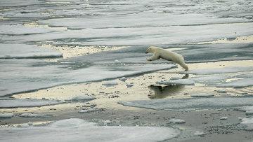 Белый медведь на острове Земля Александра. Архивное фото