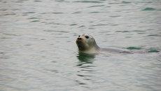 Тюлень. Архив