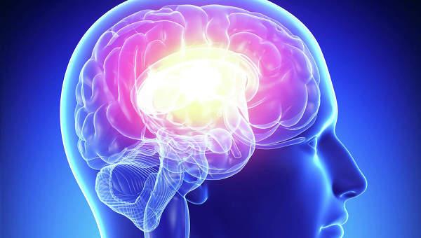 Мозг. Архивное фото