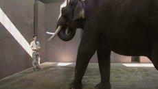 Слон Кошик говорит по-корейски со смотрителем зоопарка
