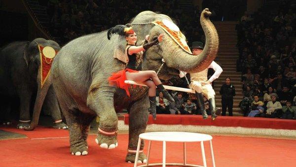 Слоны в Омском цирке