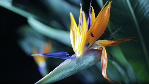 Орхидея, архивное фото