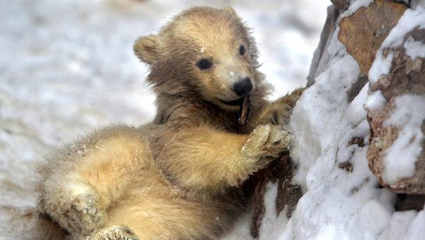 Медвежонок. Архив
