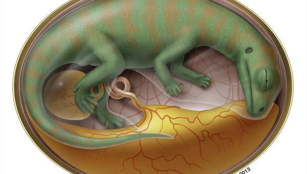 Так художник представил себе зародыш люфенгозавра