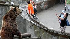 Посетители у вольера с бурым медведем в Калининградском зоопарке