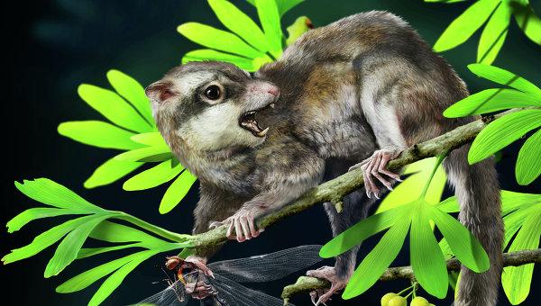 """Так выглядел его """"конкурент"""" Arboroharamiya, которого его первооткрыватели считают настоящим млекопитающим"""