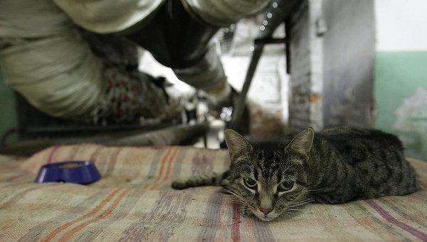 Эрмитажный кот в подвале музея, архивное фото