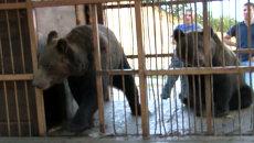 Паводок на Дальнем Востоке: эвакуация медведей и сооружение укреплений
