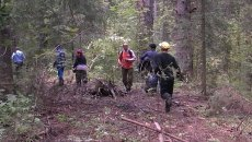 Миграционная служба обнаружила под Томском шишкарей-нелегалов