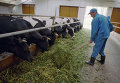 Комплекс по производству молока