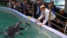 Путин покормил дельфинов и пожал ласты моржу в океанариуме Владивостока