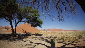 Африка, архивное фото