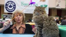 Международная выставка кошек Кубок Сибирских Афин