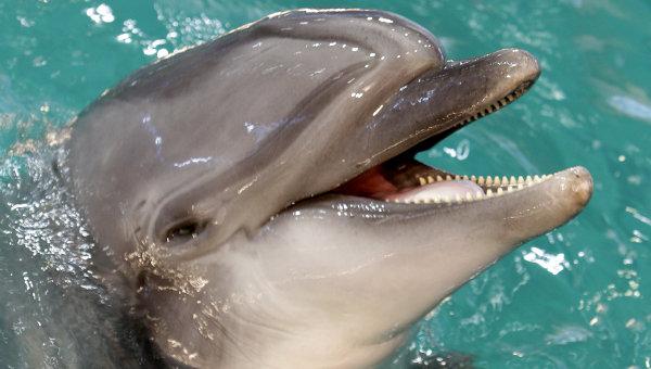 Соучредитель московского дельфинария выиграл иск против новых хозяев
