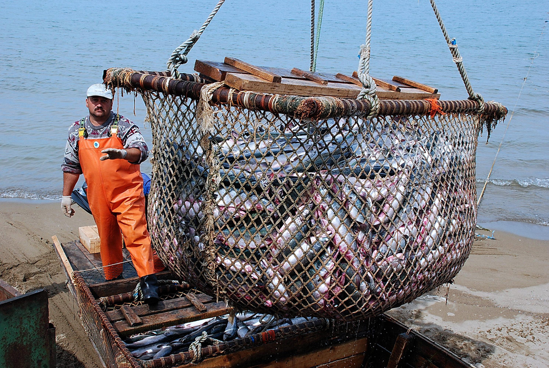 Вылов рыбы на Дальнем Востоке. Архивное фото