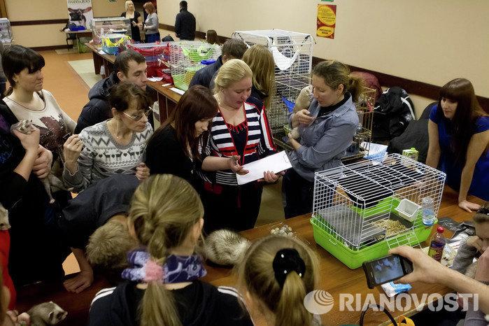 Выставка декоративных животных Маленький да удаленький в Томске